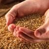 """""""É a menor de todas as sementes e se torna maior do que todas as hortaliças"""""""