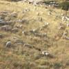 """""""Eram como ovelhas sem pastor."""""""